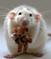 Куплю будку для собаки - последнее сообщение от gobbler