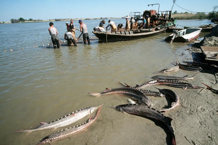 В РК предлагают наложить 15-летний мораторий на ловлю рыбы