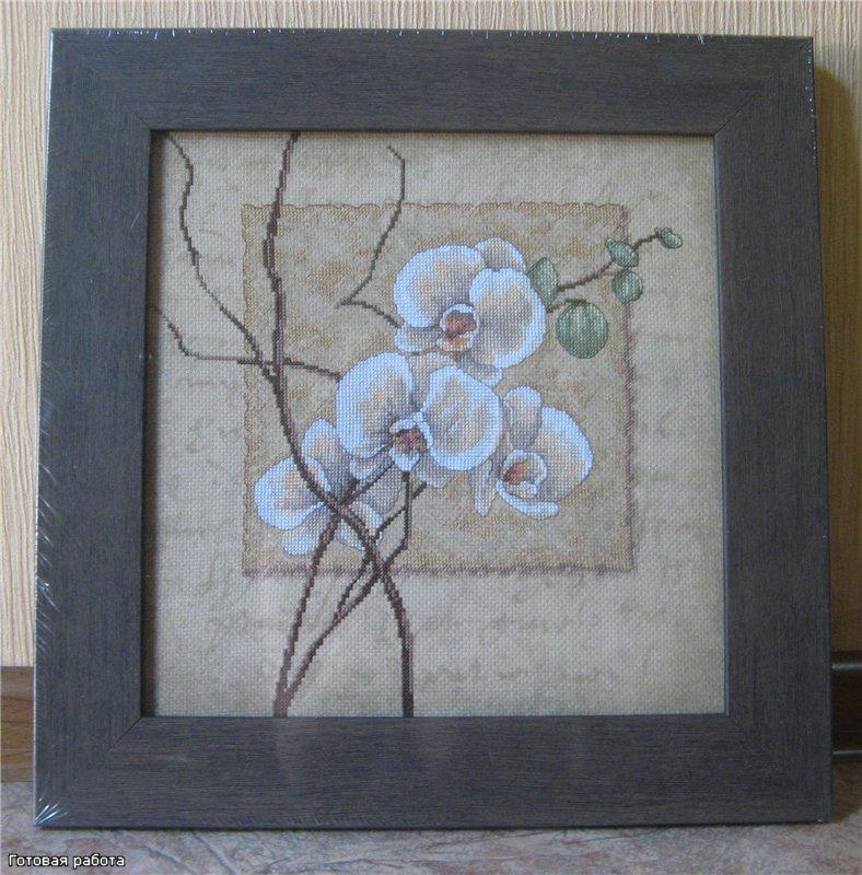 Oriental Orchids (Восточные орхидеи)