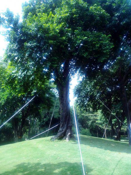 В хуавеевском парке 9
