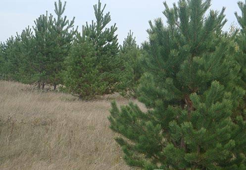 Новог елка