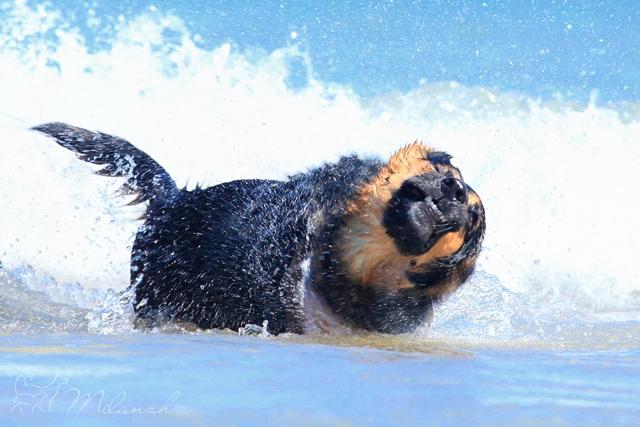 собака-вытрехака