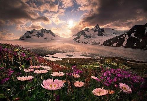 Цветочный оазис среди гор Аляски