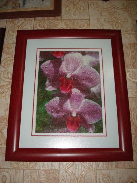 Орхидеи, ГК 575