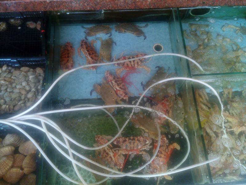 Seafood 8