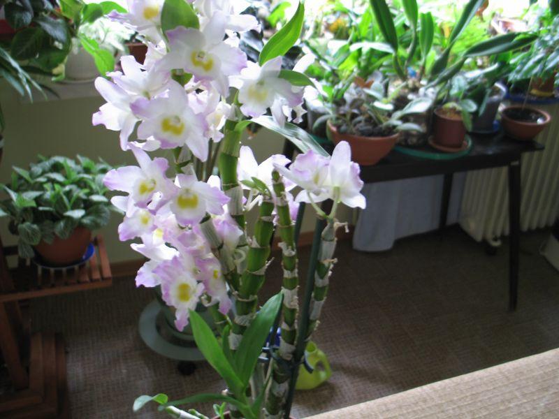 Орхидеи 005