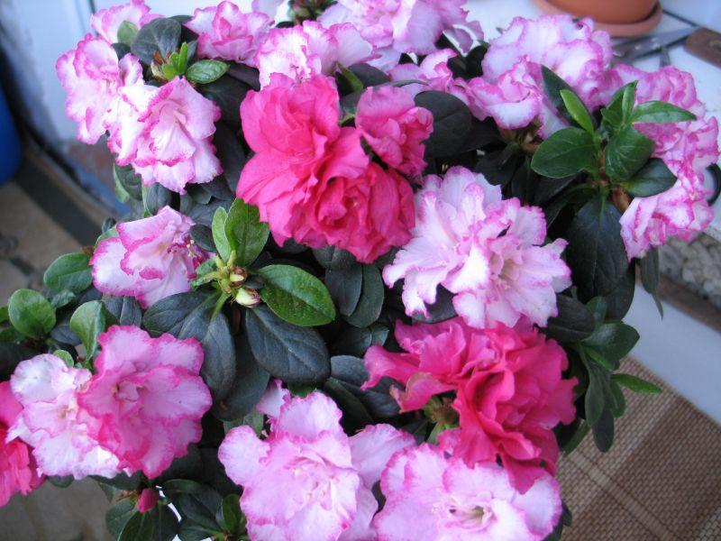 цветы 16,02,11 012