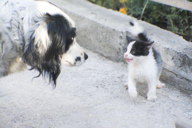 Белла и Мышонок