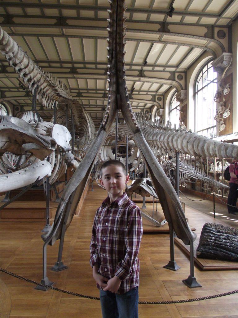 Les Galeries de Paléontologe et d'Anatomie comparée