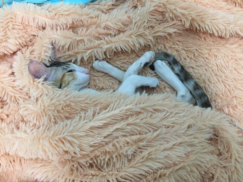 спит малышка