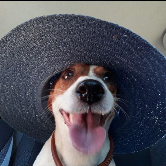 Тама- гламурная собака в отпуске