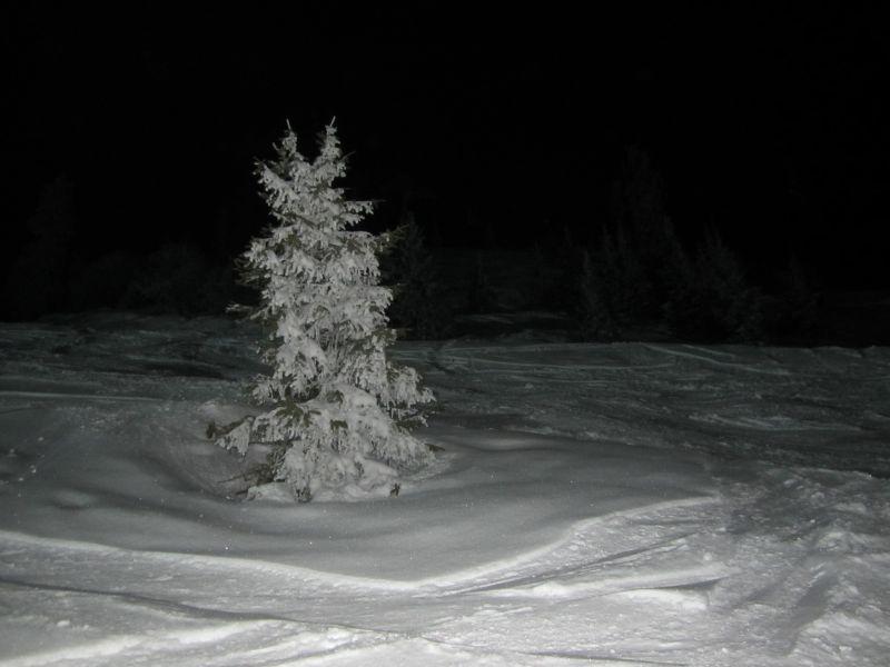 Chim 080313 night 007