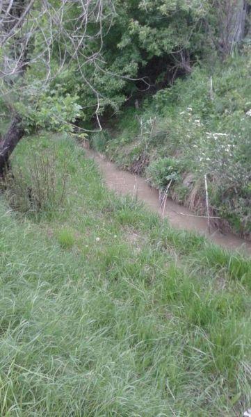 Речка по южной границе участка (1)