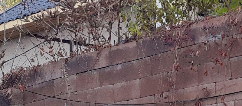 соседский забор