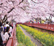 Корея весной.jpg