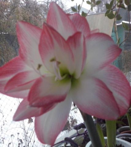 цве (1).jpg