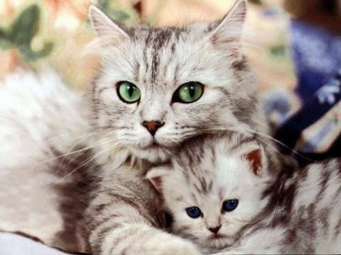 кошка с котенком.jpg
