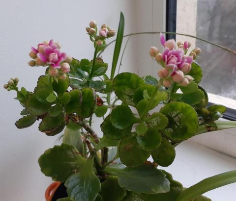 flower N.jpg
