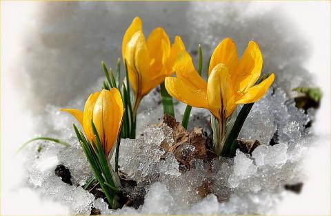 весна1.jpg