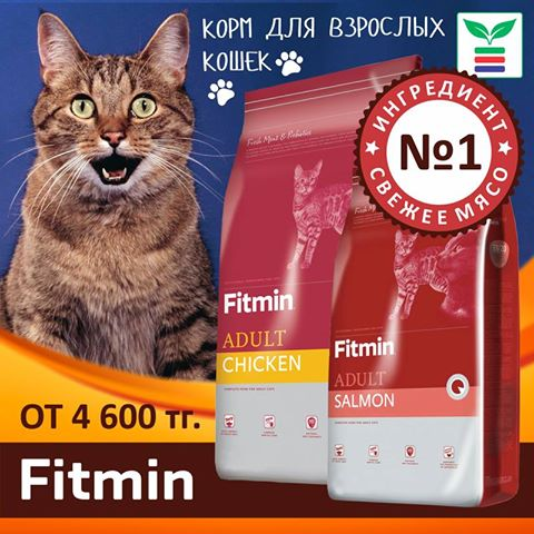 Fitmin_cat.jpg