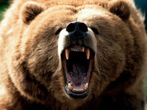 Medved-grizli2-700x525.jpg