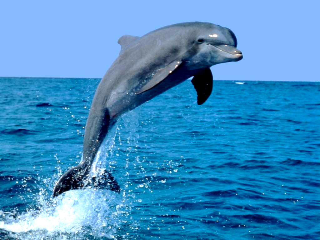 an in depth description of the physical and internal features of dolphins