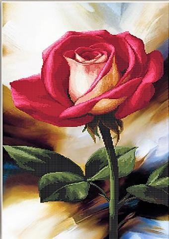 роза краснобелая.jpg