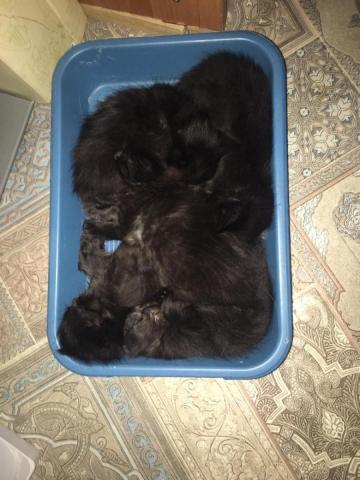 5 котят09c092c0-0f82-418d-9b81-8536668fde5b.jpg
