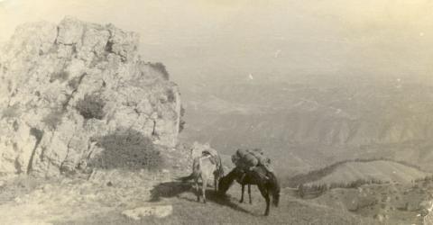 1950г. Сухой Хребет.jpg