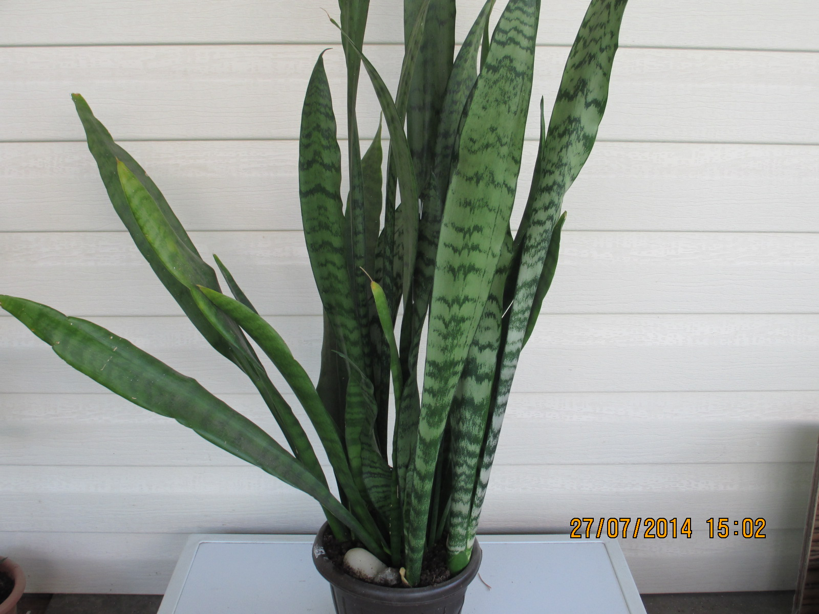 Покажи на картинке цветок орхидея появляются
