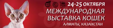 Zhanim banner_autum.jpg
