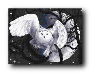 Белая сова.jpg
