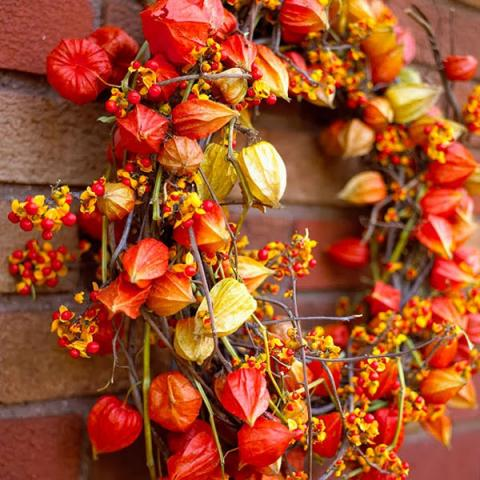thanksgiving-wreath-made-from-chinese-lantern-plants.jpg