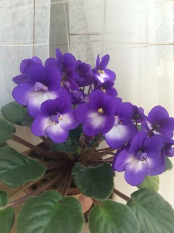 Садовая классификация растения тюльпан группы с фото и