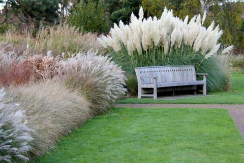травы.jpg