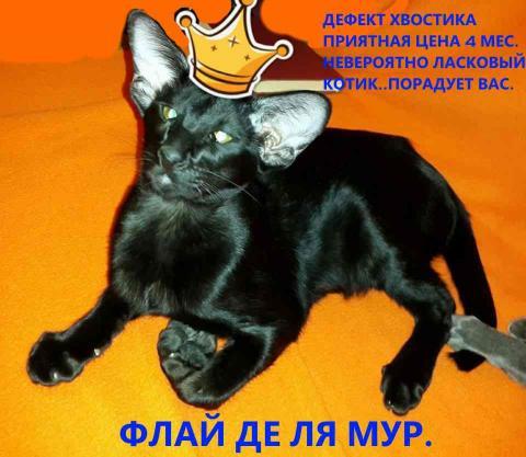 22855471_1724994870846693_802541449_n (1).jpg