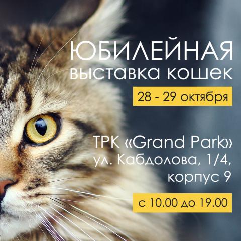 251017_выстака_кошек_1.png