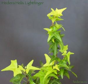lightFinger3.jpg