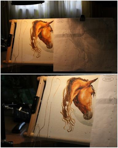 кони 1.jpg