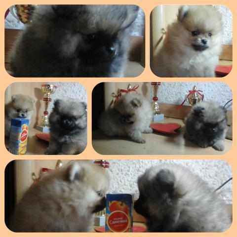 collage_photocat 2.jpg