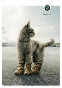 Фотография Шкодливый Кот