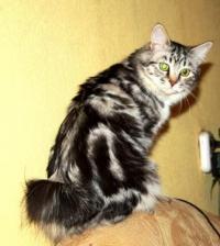 Фотография Кошка-матрёшка