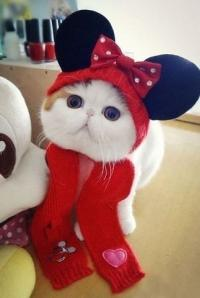 Фотография Cat10