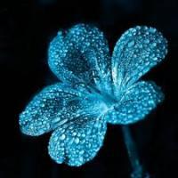красивые цветы фото букеты