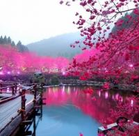 Фотография GO_chatting