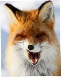 Фотография sergey_fox_1