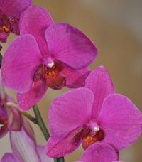 Фотография Orchidaceae