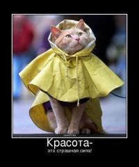 Фотография katerina_1234