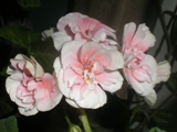 Фотография flower_60