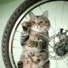 веломагазин www.bike-discount.de - последнее сообщение от StarSailor